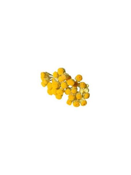 Le baume de sebastopol - Jambes légères