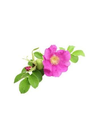 Huile de rose musquée du chili Bio