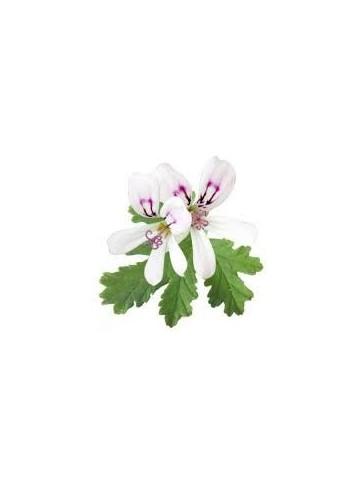 Eau florale de Géranium Bourbon