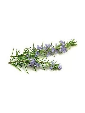 Eau florale de Romarin