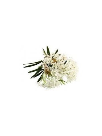 Eau florale Bio de Ledon du Groenland